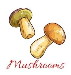 Mushrooms sketch vegetarian food vector image