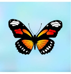 Butterfly monarch vector