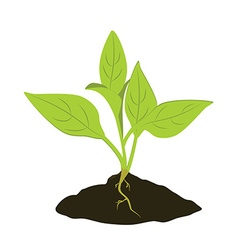 Plant seedling icon vector image