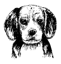 Beagle head bw vector