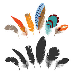 bird feathers vector image vector image