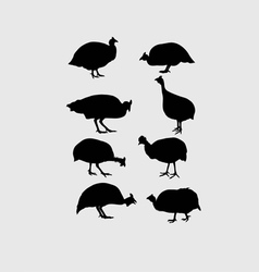 Guinea Fowl Silhouettes vector image vector image