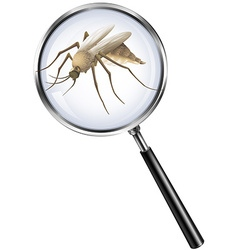 Mosquito through magnifying glass vector