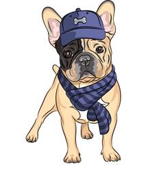 Hipster dog french bulldog vector
