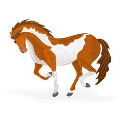 Piebald-horse vector