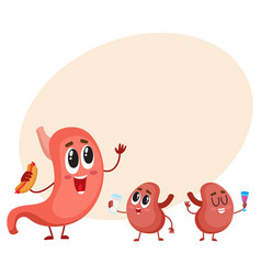 Funny smiling human stomach and kidney characters vector