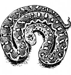 Echis venomous viper vector