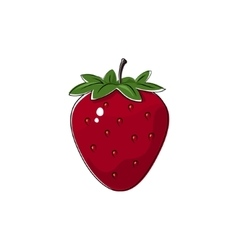Red strawberry isolated on white vector