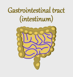 Human organ icon in flat style gastrointestinal vector