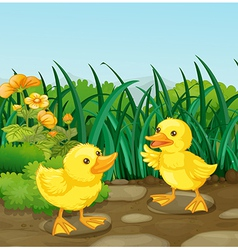 Two little ducks in the garden vector image