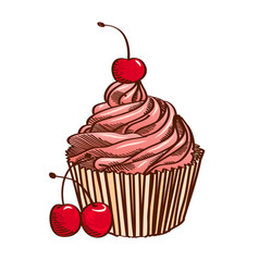 Cupcake with pink cream and cherry isolated vector