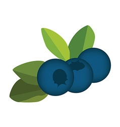 Blueberry leaves and berries vector