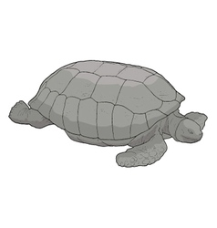 Turtle draw vector image