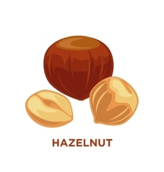 Set of detailed cartoon hazelnuts isolated vector