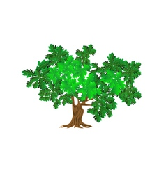 Green oak vector