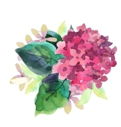 Hydrangea flowers vector image