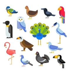 Birds set  egle parrot vector