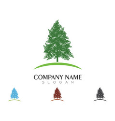Cedar tree logo template icon design vector