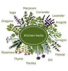 fresh kitchen herbs vector image