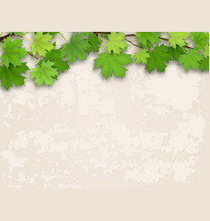 Maple tree branch green on old wall background vector