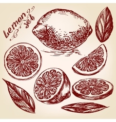 Collections of lemons hand drawn vector