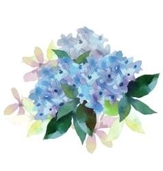 Hydrangea flowers vector