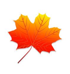 realistic autumn leaf maple leaf vector image