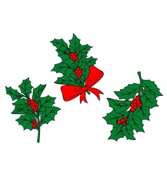 Christmas holly branch vector