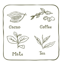 Various herbals - coffee mate cacao and tea vector image