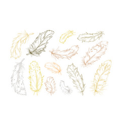Birds feathers hand drawn designer elements set vector
