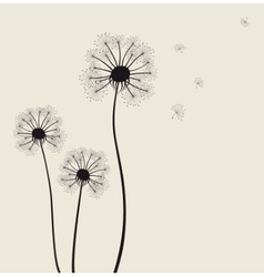 Decoration with dandelion flowers vector