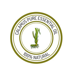 Calamus essential oil label aromatic plant vector