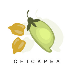 Chickpea pod infographic with vector
