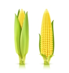 Sweet corn set vector