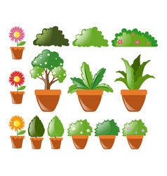 different kinds of plants in pot vector image