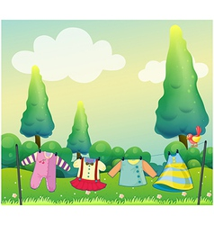 Hanging clothes near the pine trees vector image vector image