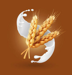 wheat and milk splash barley cereals in yogurt vector image vector image