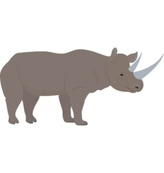 Cartoon african rhino with big horns vector
