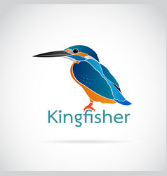 Common kingfisher alcedo atthis on white vector