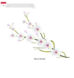 Moon orchids the national flower of indonesia vector