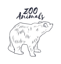 Hand drawn sketch bear wild animals vector
