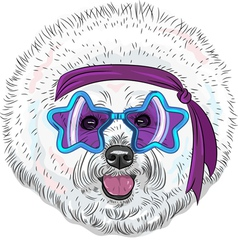 Hipster star disco dog bichon breed vector