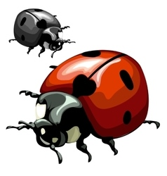 Ladybug closeup on white background vector image vector image