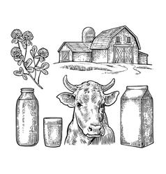 Set Milk farm Cow head clover box carton vector image vector image