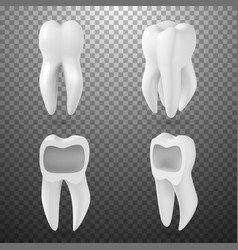Realistic 3d tooth set healthy teeth set care vector