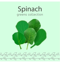 Greens Collection Image vector image