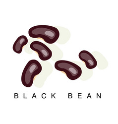 Black bean infographic with vector