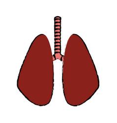 lung human organ healthycare icon vector image