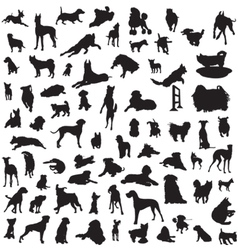 set of different breeds of dogs on a white backgro vector image