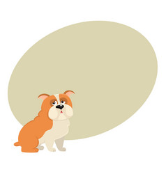 cute english bulldog dog character isolated vector image